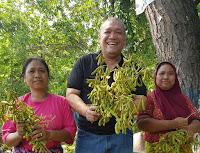 Urban Farming Solusi Emak-Emak Tekan Biaya Rumah Tangga Harian