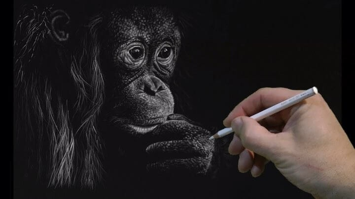 04-Baby Chimp-Richard-Symonds-www-designstack-co