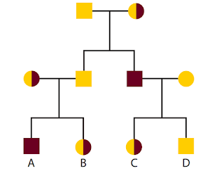 مخطط العائلة