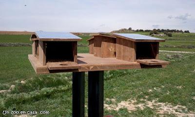 Cajas nido para cernícalo primilla