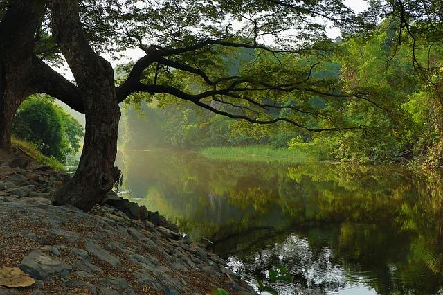 Cari Jawaban Soal Kelas 4 Tema 9 Subtema 2: Manfaat Sungai dan Manfaat Pohon bagi Manusia