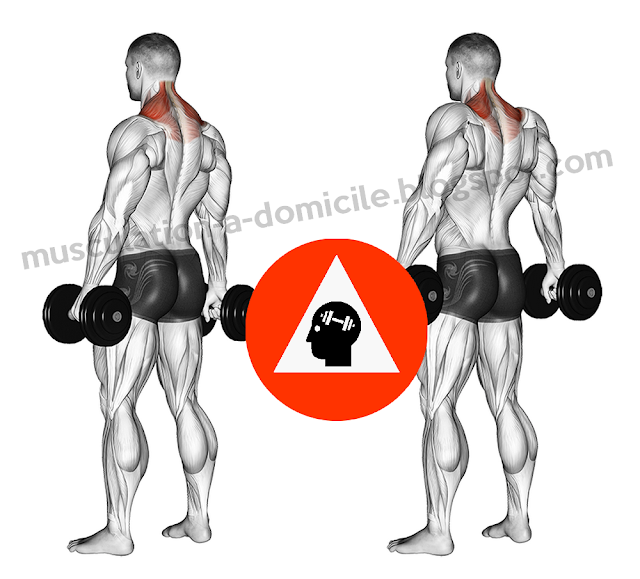 exercice musculation trapèzes haussement épaules shrugs