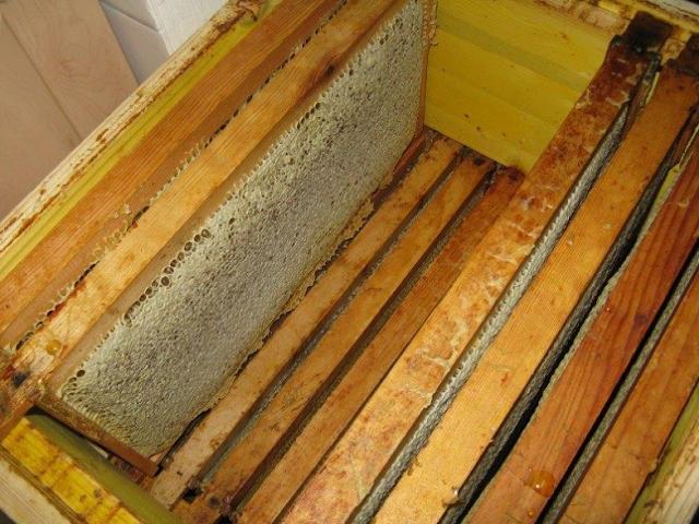 Να πως μπορούμε να βελτιώσουμε τις αποδόσεις των μελισσιών μας!