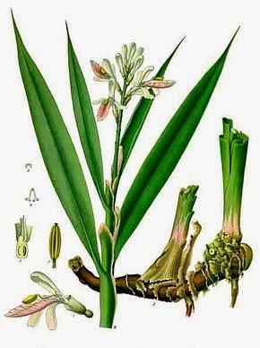 Plantas medicinales del Bosque Mediterráneo