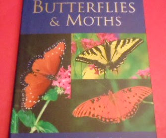 A Pocket Guide To Butterflies Moths