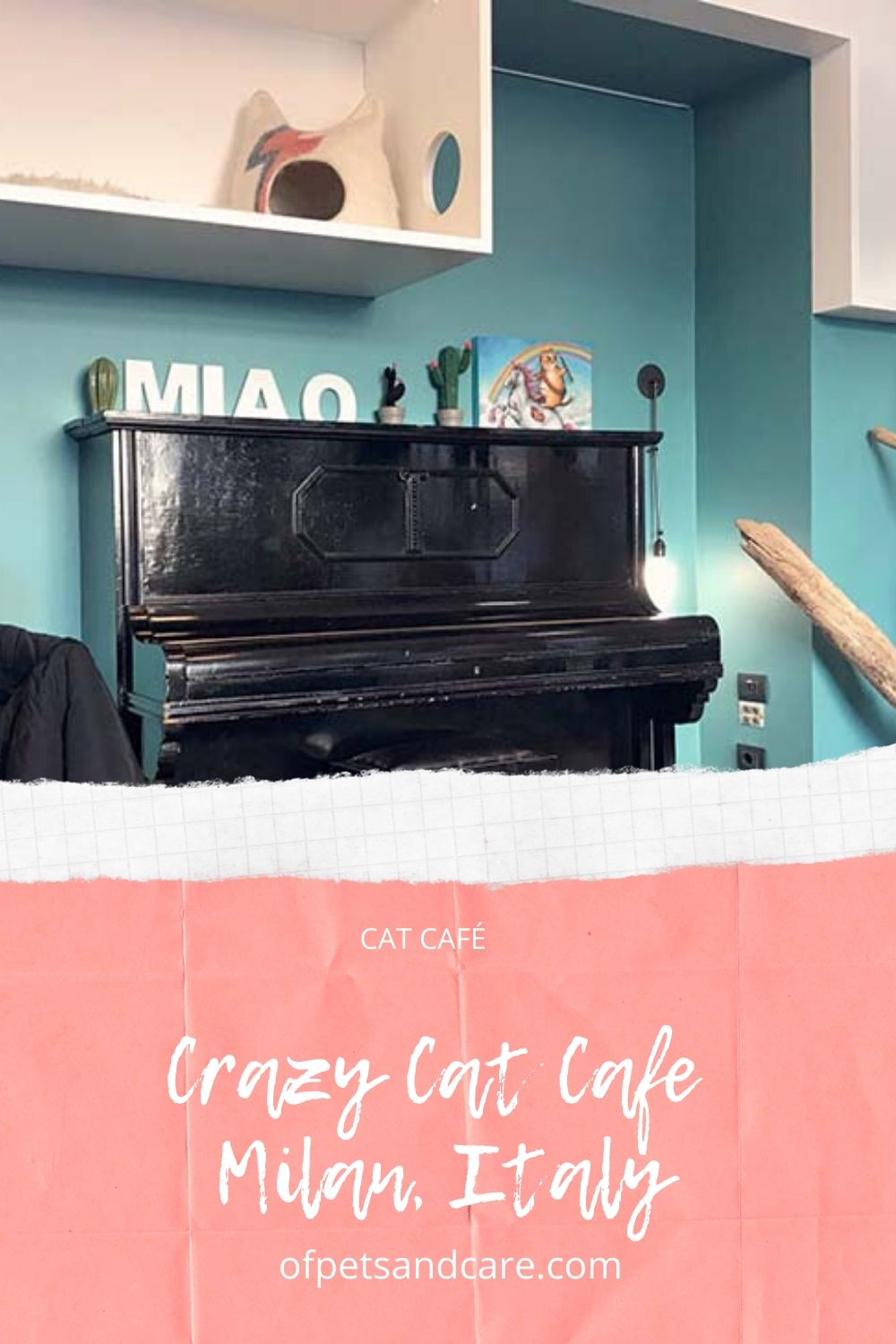 Crazy Cat Cafe in Milan