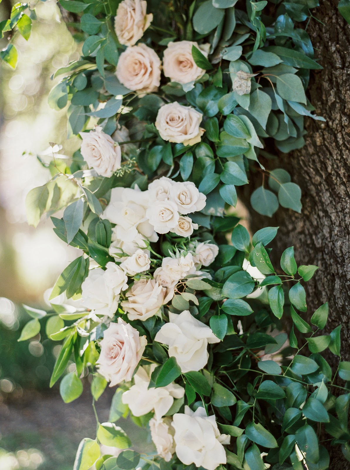 Rose Da Giardino Rampicanti wedding inspiration & rose 'madame alfred carriere'. | cool