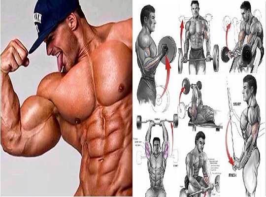 The 12 Best Bicep and Tricep Exercises for Mass - bodybuilding110