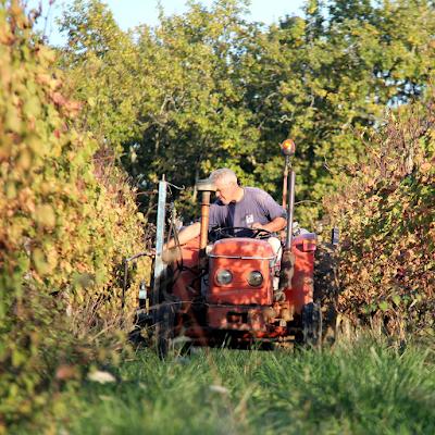 Work in the vineyards.
