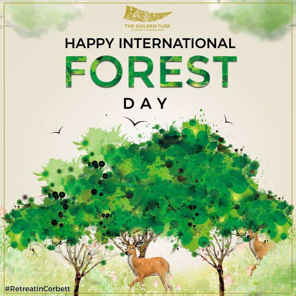 International Day of Forests Wishes Awesome Picture
