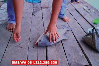Essen Ikan Bawal Galatama