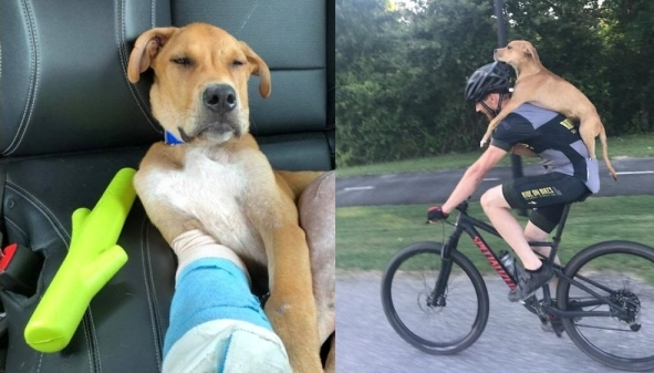 White Wolf : Injured stray puppy hitches ride into town on