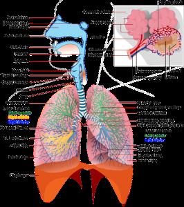 Gambar Penyakit Paru Paru