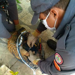 Gato é salvo por bombeiros do 17º GBM após ficar preso em cerca elétrica em Barreiras*