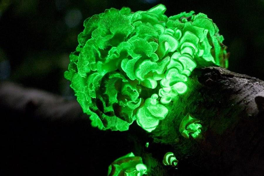 arboles-luminosos-naturales