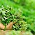 4 loại rau được ví như nguồn insulin tự nhiên, Việt Nam rất nhiều và rẻ