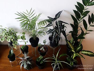 Plantas para quarto