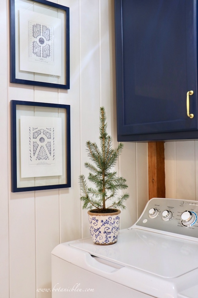 Blue Christmas Laundry Room decorated with small spruce seedling in a blue and white scroll flower pot