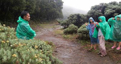 foto Bunge edelweis di gunung papandayan