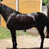 Catean hípico y hallan costosos caballos de Karime Macías en Xalapa, Veracruz