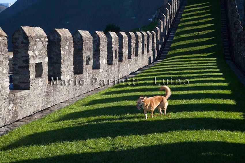 castelli di Bellinzona, la murata