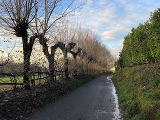 Via Madonna della Castagna with pollarded trees.