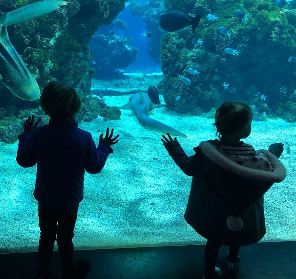 Valentine's day gift. Princess Charlene, Prince Jacques and Princess Gabriella visited the Oceanographic Museum in Monaco