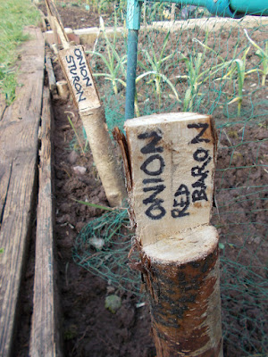 DIY plant labels  80 Minute Allotment Green Fingered Blog