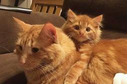 Alasan Induk Kucing Tidak Mau Menyusui Anaknya