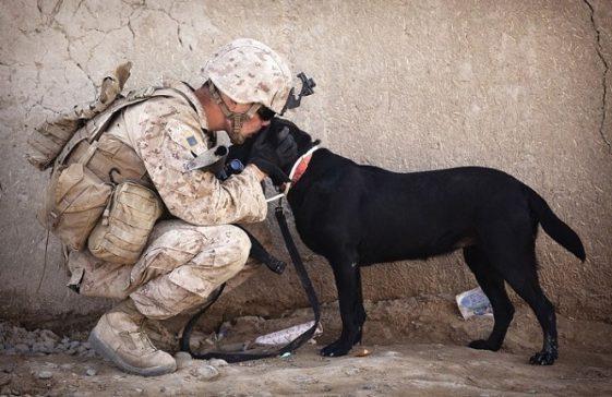 Ternyata, Anjing Bisa Mengenali Mana Orang Jahat dan Baik