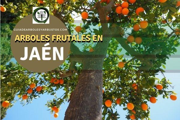 Arboles Frutales en Jaén, España