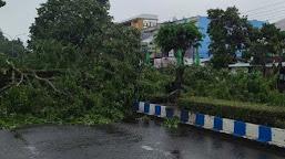 Akibat Pohon Tumbang, Beberapa Ruas Jalan di Kota Bengkulu Macet Total