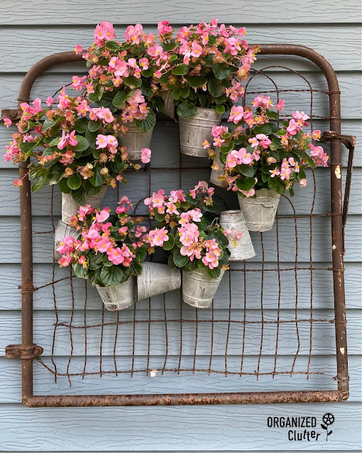 Photo of pink wax begonias planted in a galvanized pot wreath