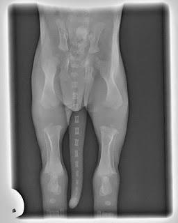 estrutura óssea de filhotes