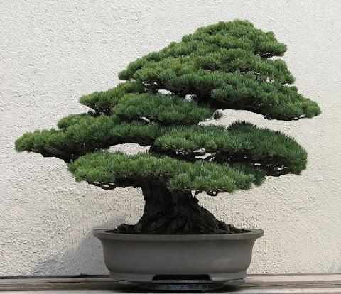Ásványbörze és bonsai-kiállítás Óbudán