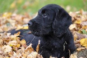Hình ảnh những chú chó trong rừng mùa thu