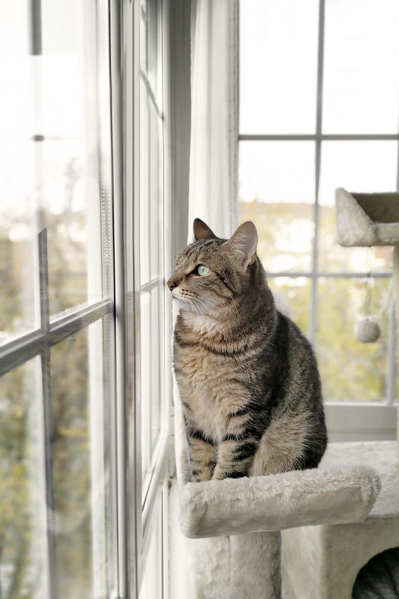 LIFESTYLE NOVEMBER - COCO THE CAT