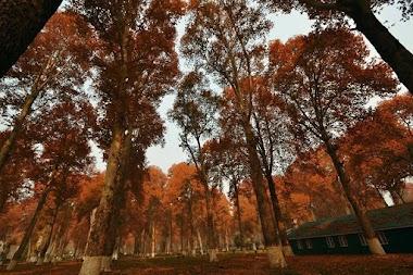 An Autumn Weekend in Kashmir