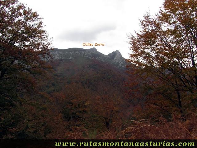 Ruta Bosque de Peloño: Vista del Collau Zorru