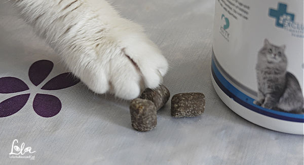 Cat with a white paw reaching for Kidney-Vitalize by Scruffy Paws Nutrition