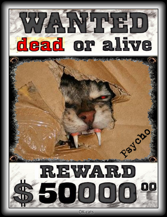 Photoshopped Cat picture • Dangerous Psycho cat • Wanted dead or alive • REWARD $50,000