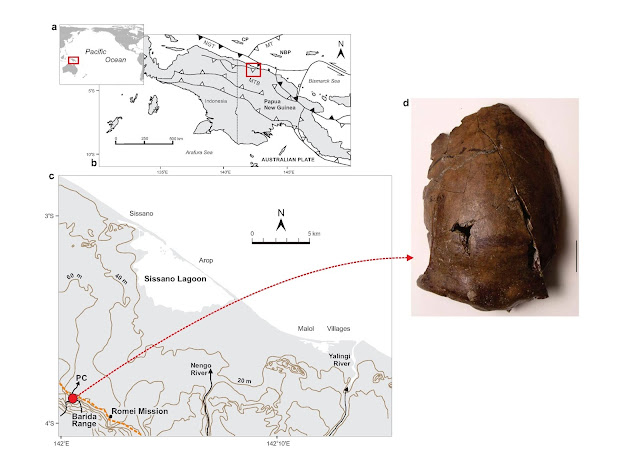 6,000 year old skull could be from the world's earliest known tsunami victim
