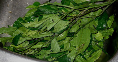Ugu (Pumkpin Leaves) – Natural Blood Tonic