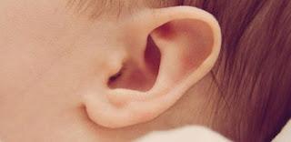 8 Fakta Tentang Telinga yang Tidak Ketahui Banyak Orang