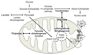 Tiamin memainkan peran sebagai kofaktor metabolisme glukosa didalam sel
