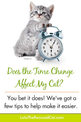 does the time change affect my cat?