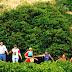 Pé de café em Laranja da Terra chama atenção pelo tamanho, idade e produção