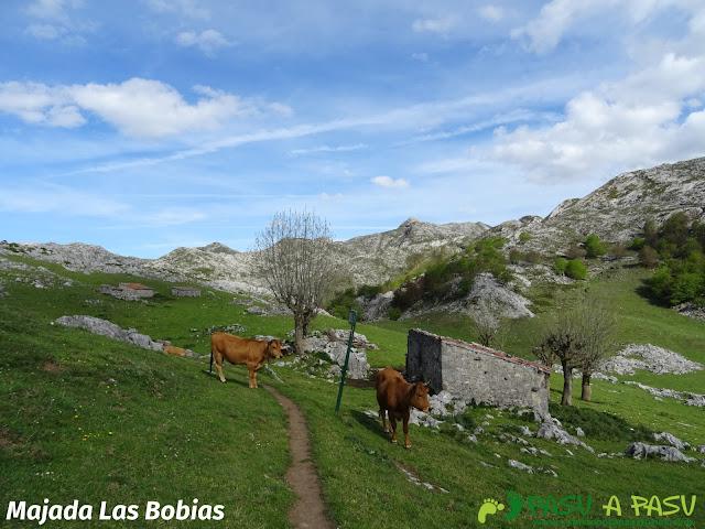 Majada las Bobias, camino entre el refugio de Vega de Ario y el Lago Ercina