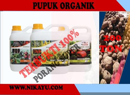 Pupuk Organik, Hasilkan 200 TON Umbi Tanaman Porang Super – Terbukti 100%