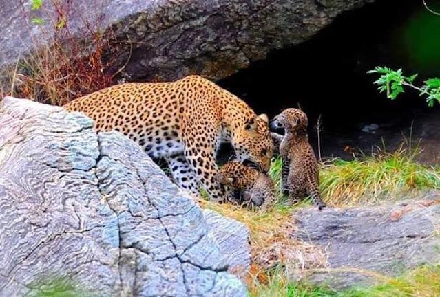 යාල පැත්තේ රවුමක් දාන්න යමුද? 🐅🐆🐃🦚🐘🦌 (Yala National Park) - Your Choice way